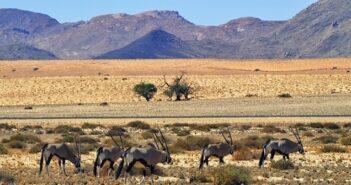 Immobilien in Namibia: Eine lohnenswerte Investition?