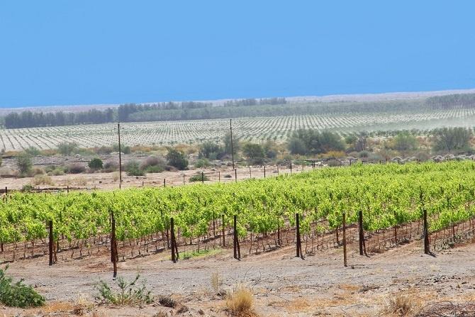 Die einen verwirklichen sich in einer eigenen Weinfarm, die anderen freuen sich auf die Jagd. All das ist dort möglich und all das können Gründe sein, eine Immobilie in Namibia zu kaufen. Darum Namibia. (#02)